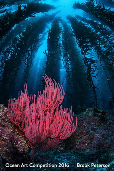 Τhese Beautiful Underwater Photographies Will Make You Want to Be a Diver.9