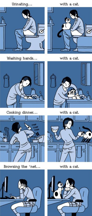 Owning A Cat