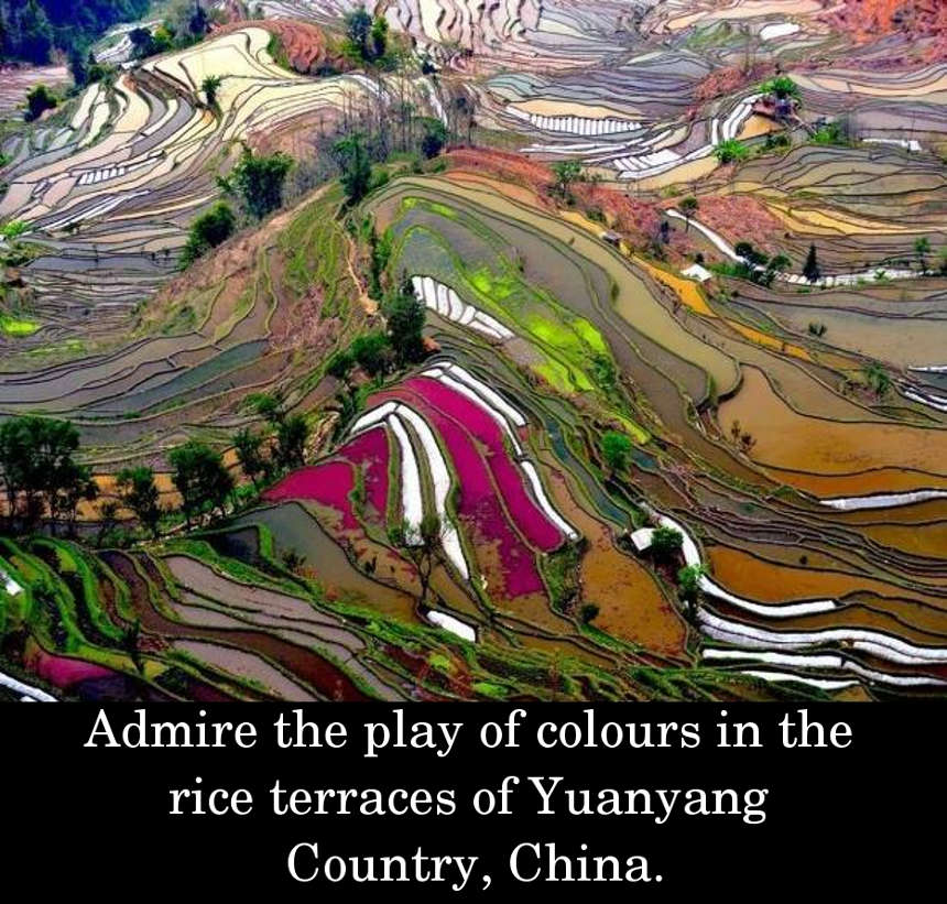 Admire the play of colours in the rice terraces of Yuanyang Country, China.
