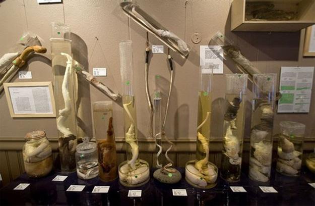 Icelandic Phallological Museum - 6