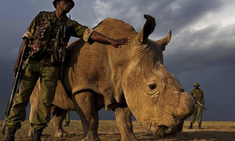 The Last of a Kind The Death of Africa's Last Male White Rhino -1