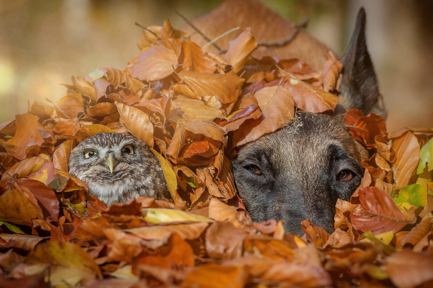 2. Ingo and Poldi having some fun in a pile of autumn leaves
