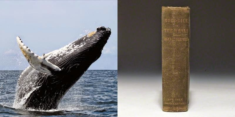 21. There are whales alive today who were born before Moby Dick was written.