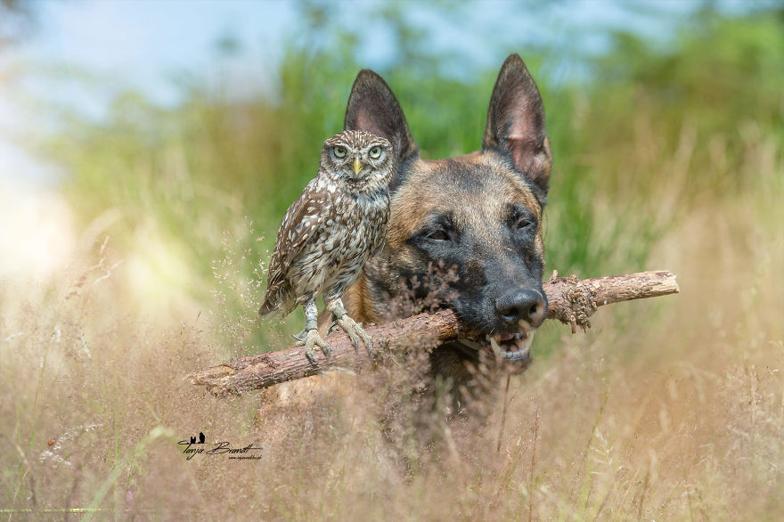 30. Poldi looks into the camera atop his usual perch, a branch held by Ingo