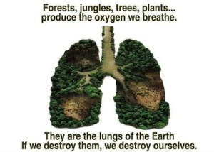 earthlungs1