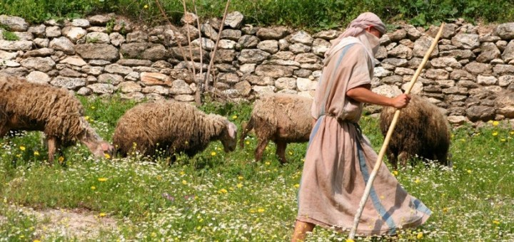 Pastoral Life—Shepherds | Truth Or Tradition?