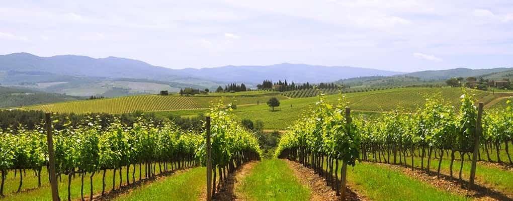 Chianti Vineyards - A Slow Travel Experience with Km Zero Tours