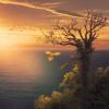 Lydplade med solnedgang