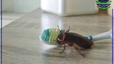 قتل الصراصير بالخل, أفضل طريقة فعالة لقتل الصراصير بالخل والتخلص منه نهائياً, شركة المركز العالمي
