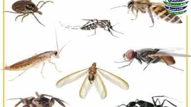 أنواع مبيدات الحشرات, أنواع مبيدات الحشرات, شركة المركز العالمي