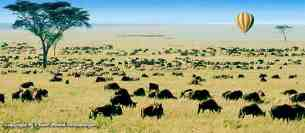 Migration - Safari Masaï Mara par avion 3jours depuis Diani Beach Kenya.