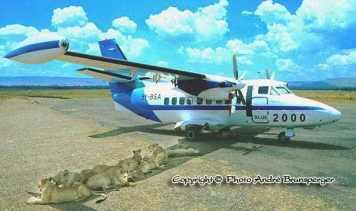Lions sous ailes avion - Safari Masaï Mara par avion 3jours depuis Diani Beach Kenya.