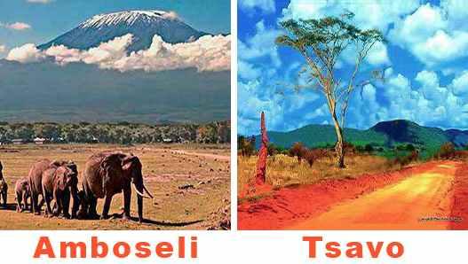 Safaris Tsavo Amboseli en camp 3jours depuis Diani beach Kenya