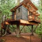 Tree Houses You Would Want To Live In