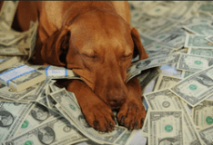 thrift savings plan_sleeping_dog_money