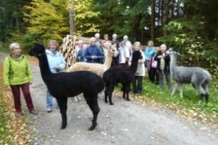 TSV Ausflug Alpaka 2015-10-13 (23)