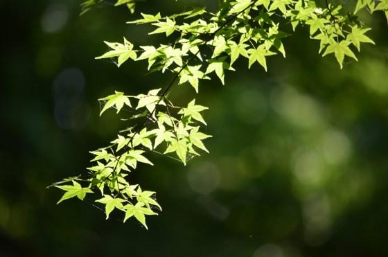 下鴨神社〜清水寺 — 駆け足だったけど嬉しい京都観光♪