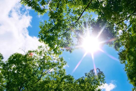 tree_woods_beiz.jp_M02521