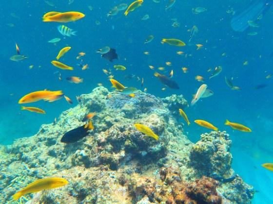 糸満 大渡海岸(ジョン万ビーチ) — 珊瑚礁の美しい海岸でシュノーケリング!! [2014.8. 沖縄旅行記 その6]