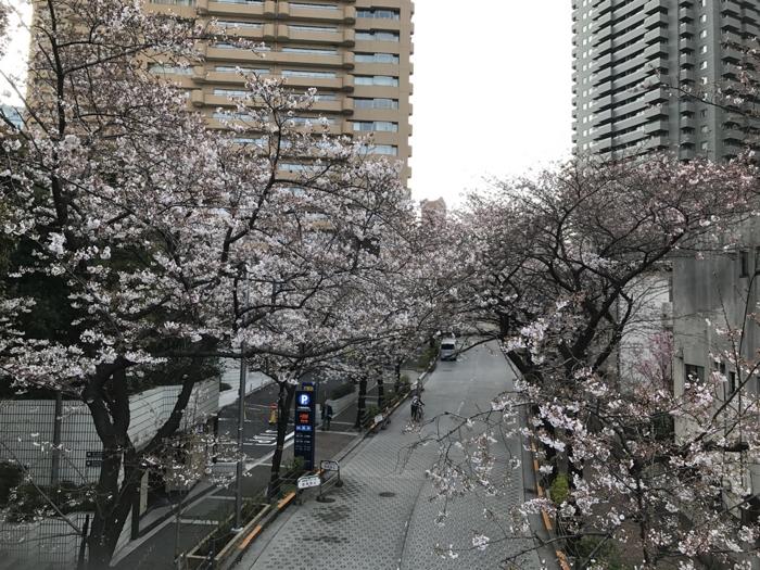 風邪と寝不足で厳しかったがやり切って夜鎌倉に移動した一日!! [ノマドワーカーの自由すぎる日常]
