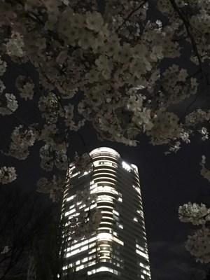 2017年 満開の桜たち 六本木・赤坂 その2 [2017]