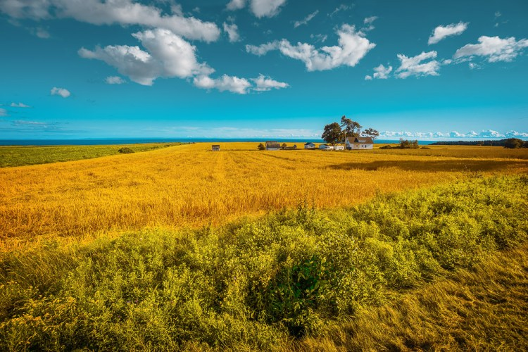 Canada Prince Edward Island Endless Fields Eastern Shore