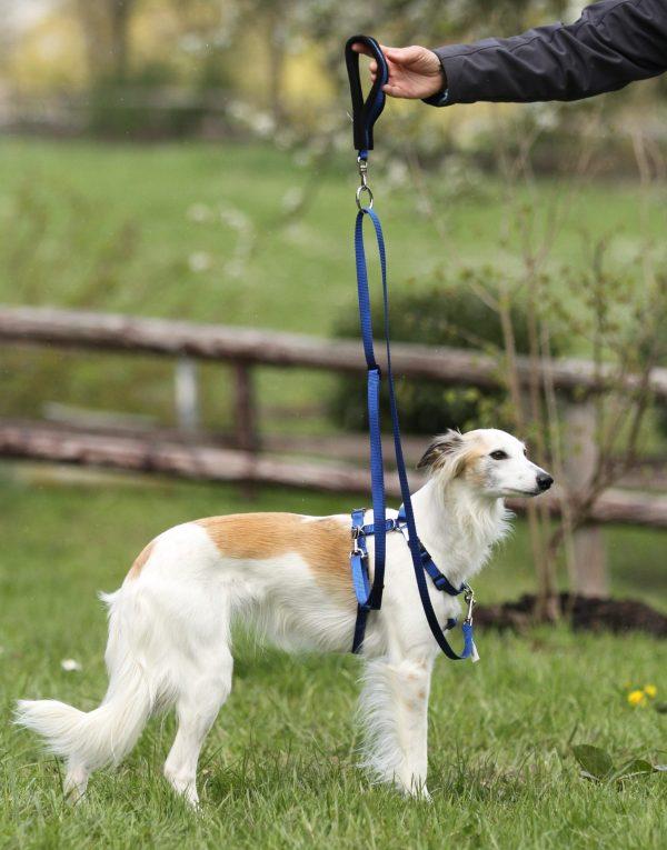 Tellington TTouch Harmony Dog Harness system