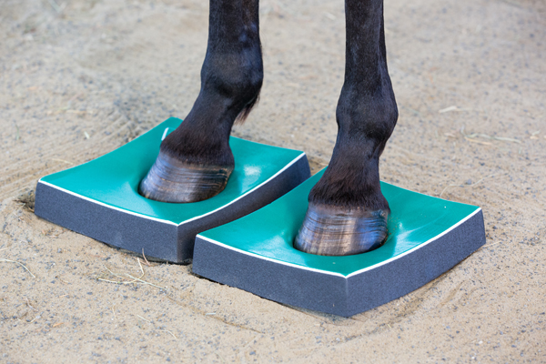 A horse stands on Surefoot firm pads