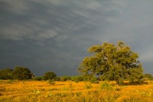 24. Storm at Mason