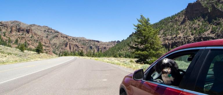 Jake in Shoshone canyon