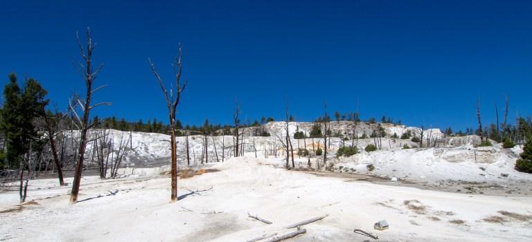 Yellowstone National Park near Mammoth Hot Springs
