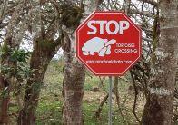 Galapagos tortoise sign