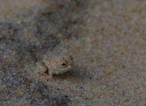 Teeny frog... wildlife here too