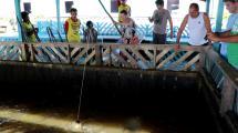 Fishing pirarucu