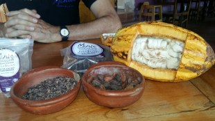 mindo chocolate quetzal