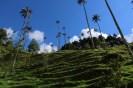 cocora colombia