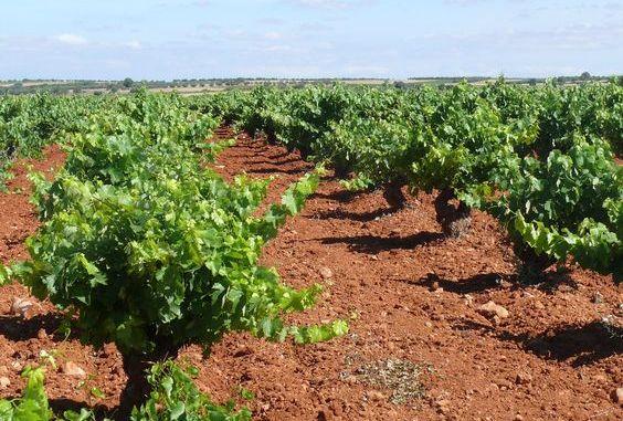 El producto denominado Tessior fue presentado en Utiel a un numeroso grupo de viticultores de la provincia de Valencia.