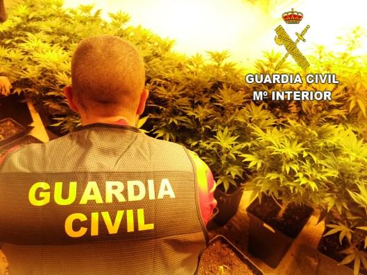 Se han incautado 206 plantas de marihuana y material utilizado para el cultivo de esta sustancia.