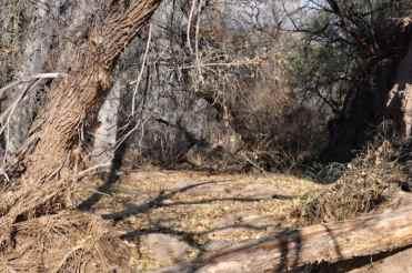 Gabe Zimmerman Davidson Canyon Trailhead-22