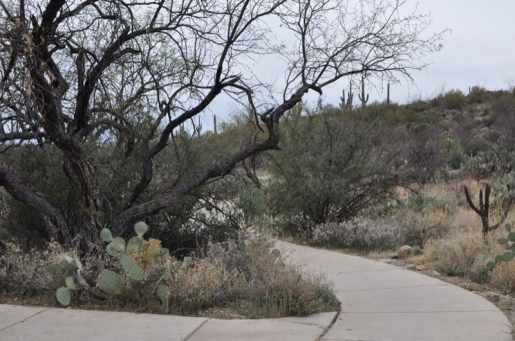 Saguaro National Park EAST pathway