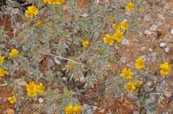desert flowers at Saguaro National Park EAST