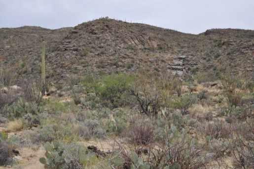 hiking trail at Saguaro National Park East