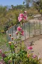 Case Park flowers