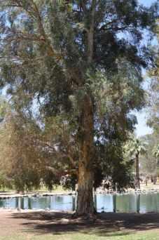 trees are plentiful at Gene C Reid Park