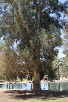 trees are plentiful at Gene C Reid Park