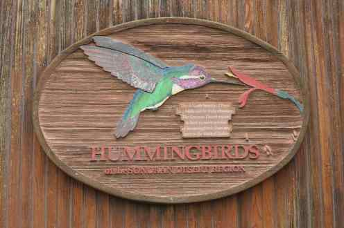 Hummingbirds at Arizona-Sonora Desert Museum