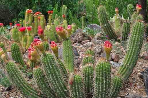 June cacti at Arizona-Sonora Desert Museum