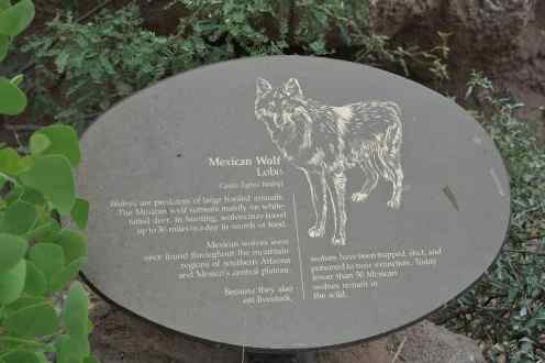 Lobo at Arizona-Sonora Desert Museum