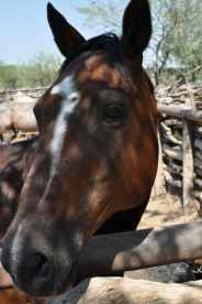horse at Tanque Verde Ranch
