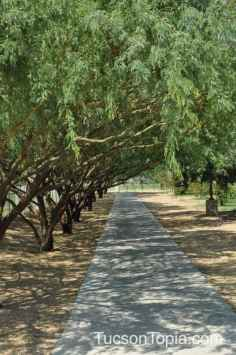 tree-lined sidewalk at Brandi Fenton Memorial Park